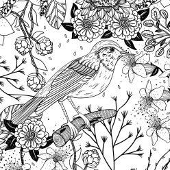 The Cuckoo bird on the branch in the garden