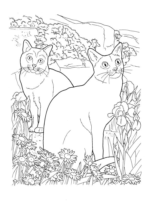 Cats of the breed Korat