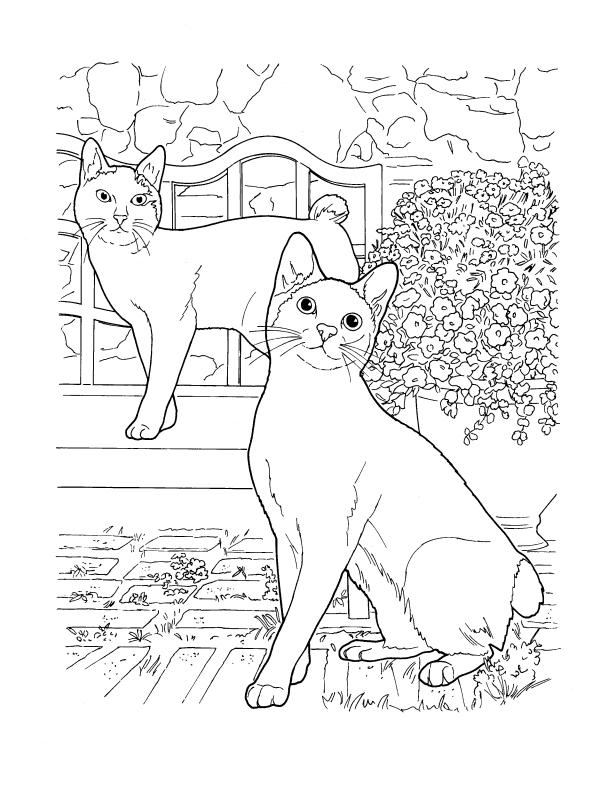 Cats breeds Japanese Bobtail