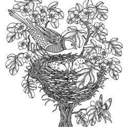 Bird over the nest