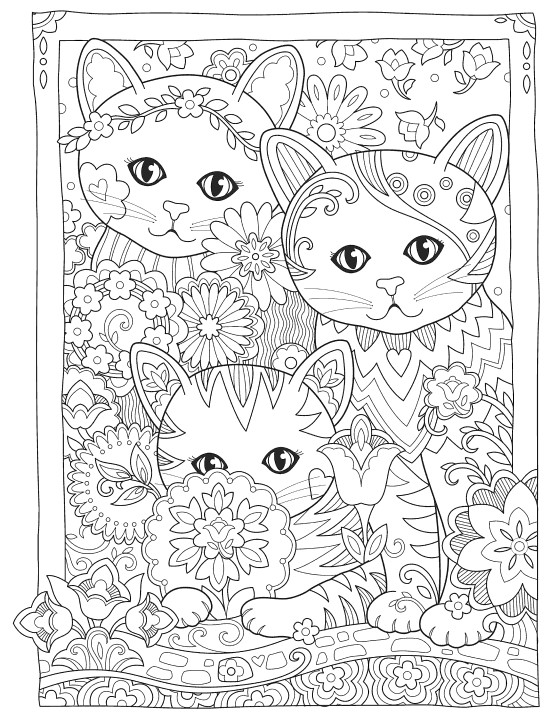 Beautiful three cats
