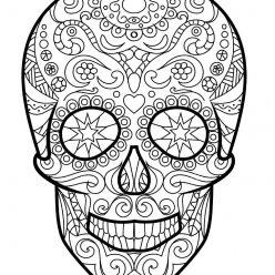 A human skull with teeth