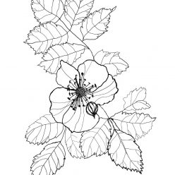 Branch of briar with flower