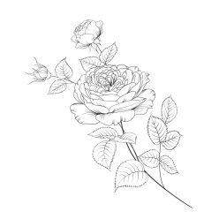 Sprig of three roses