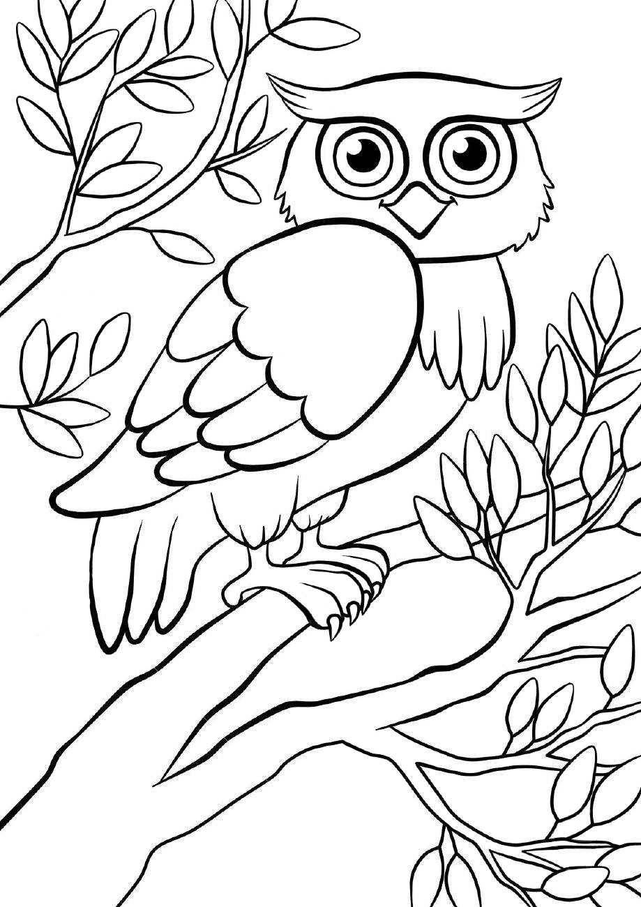 Owl - Coloring pages for you